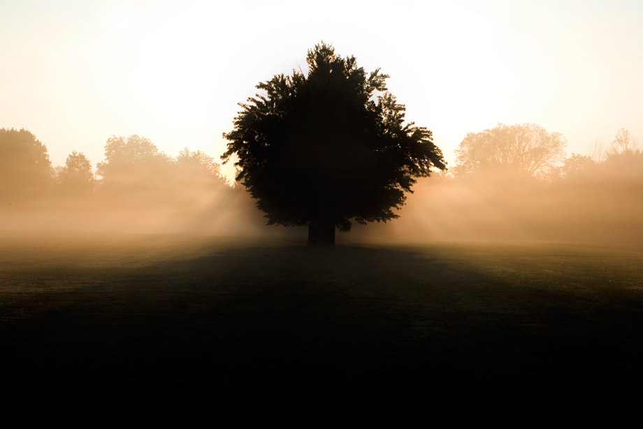 Tree silhoutte, fall morning